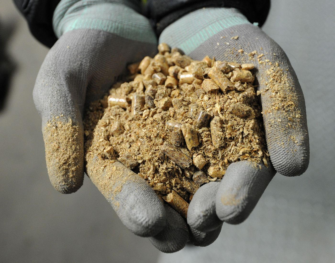 Europe Needs to Be Frank About Biomass