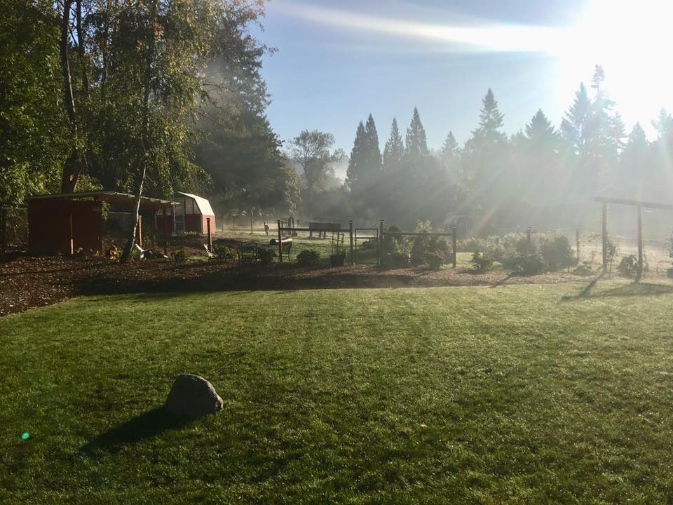 Our back yard...I love it in the summer.