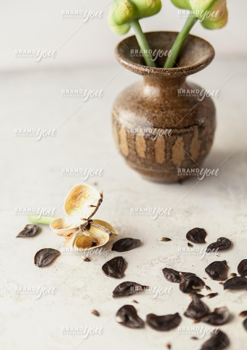 Brand Spanking You Stock Seed Pods Pinterest-2683.jpg