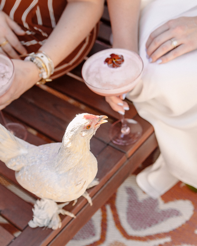 A hen party bridal shower with chickens. Hosted by Drinking with chickens and featured in Country living magazine.