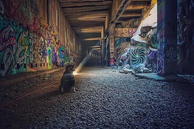 Yogi taking a break hiking the tunnels today. - #NEVERSTOPexploring #sonya6300 #ignorcal #findyourselfoutside #goneoutdoors #splendid_shotz #graffiti  #chasingemotions  #adventure #wildernessculture  #agameoftones #beautiful_colors #jaw_dropping_shots #WestCoast_Exposures #theoutbound  #travel #huffpostgram #ageofphoto #wanderlust #VisualsCollective #welivetoexplore  #travelstoke  #a6300sony #tunnelvision #a6300 #tahoesouth #truckee #tunnel #welivetoexplore