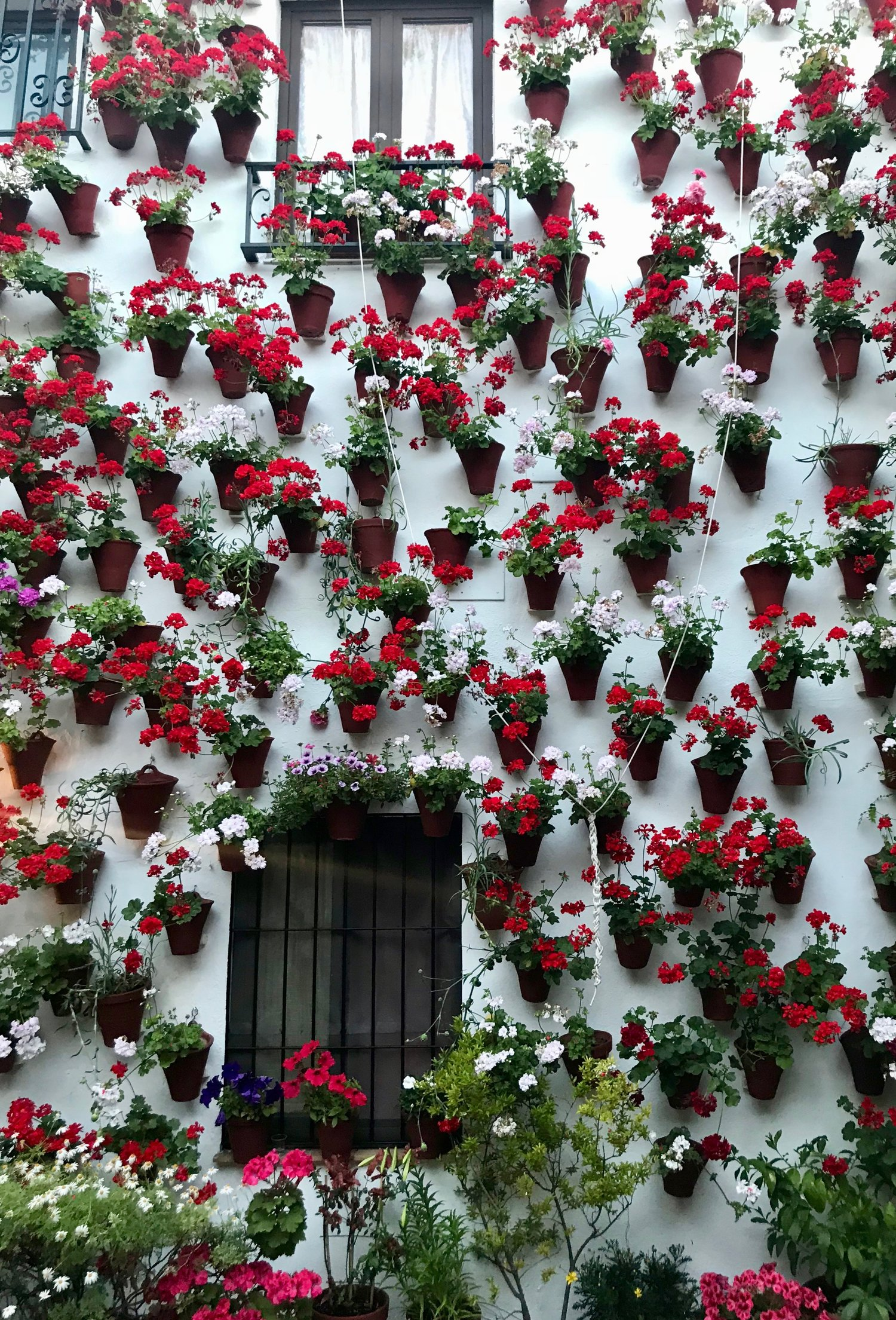 The most famous feature of Cordobés patios are the flower-covered walls, which gardeners water with a complicated system of pulleys, watering cans, and irrigation technology.