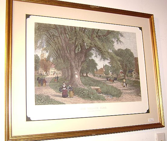"""The Vintage Elms"" Colored Engraving"