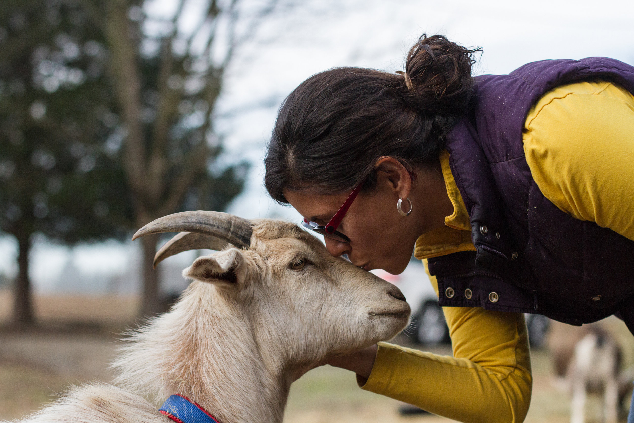 Sandra Domville shares a tender moment with one of the goats on her farm. Febuary 8, 2017.