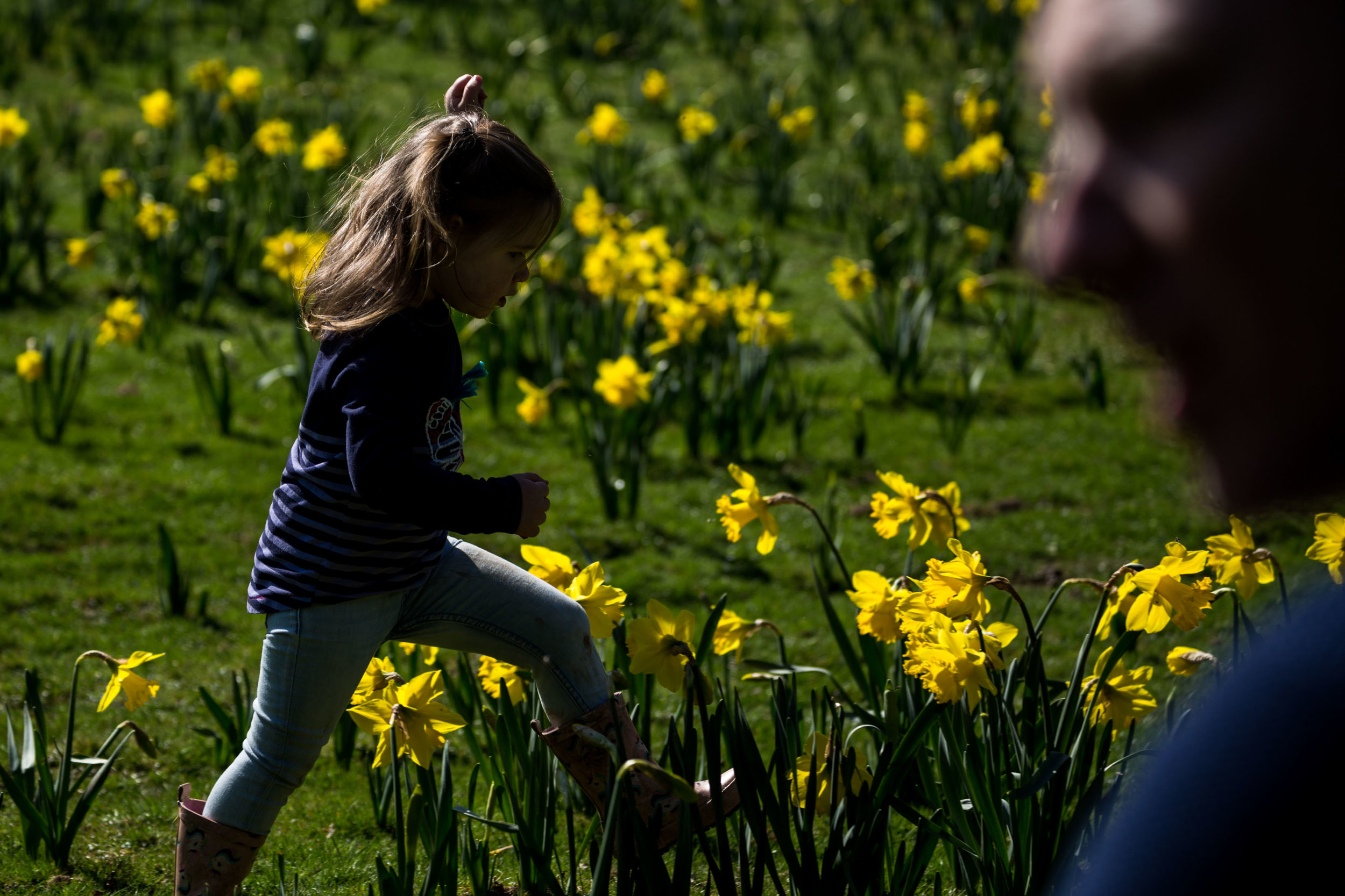 Hazel carefully walking through the daffodil patch and trying not to step on any after lengthy conversations about being gentle with nature and plants.