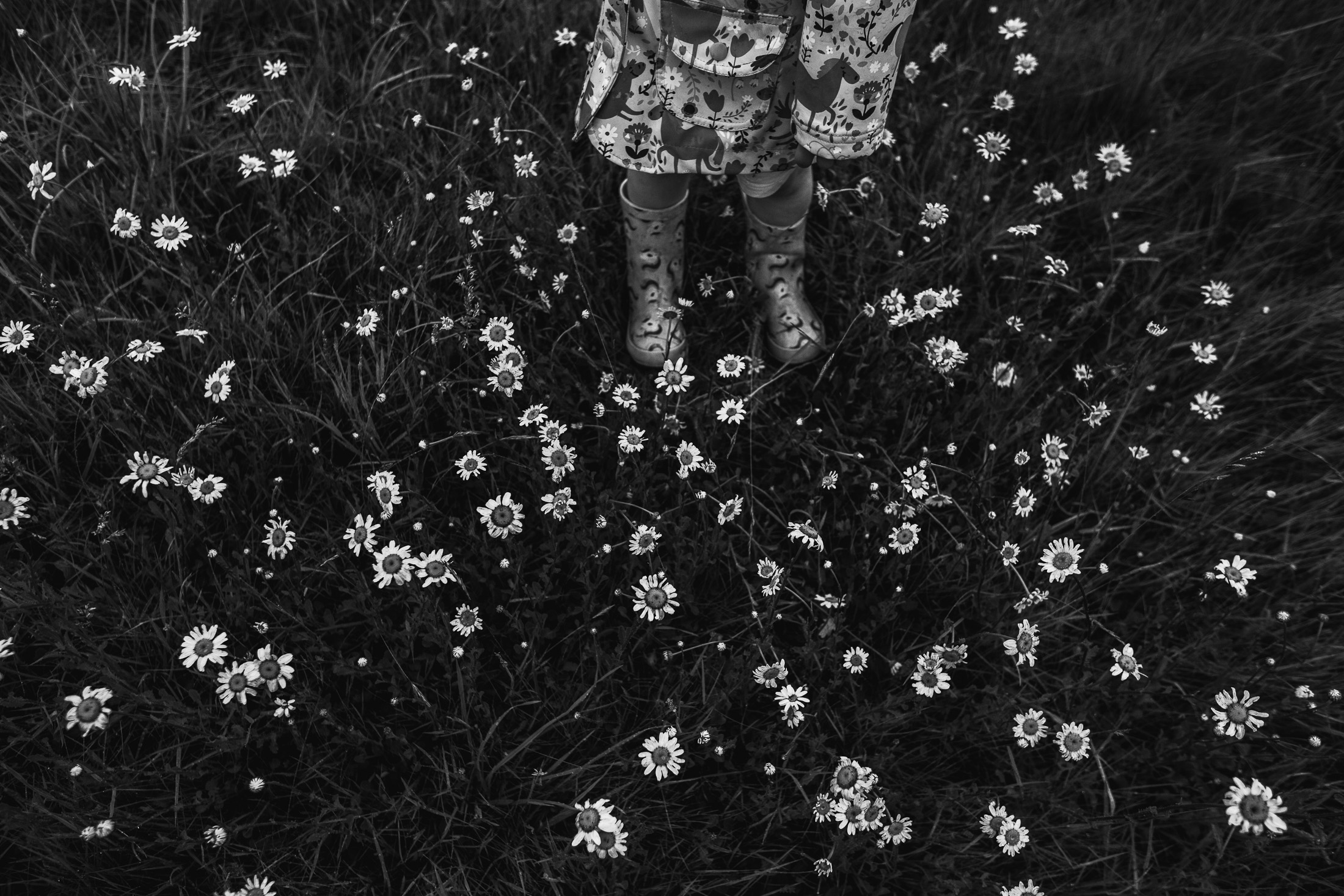 wellies and daisies family photography.jpg