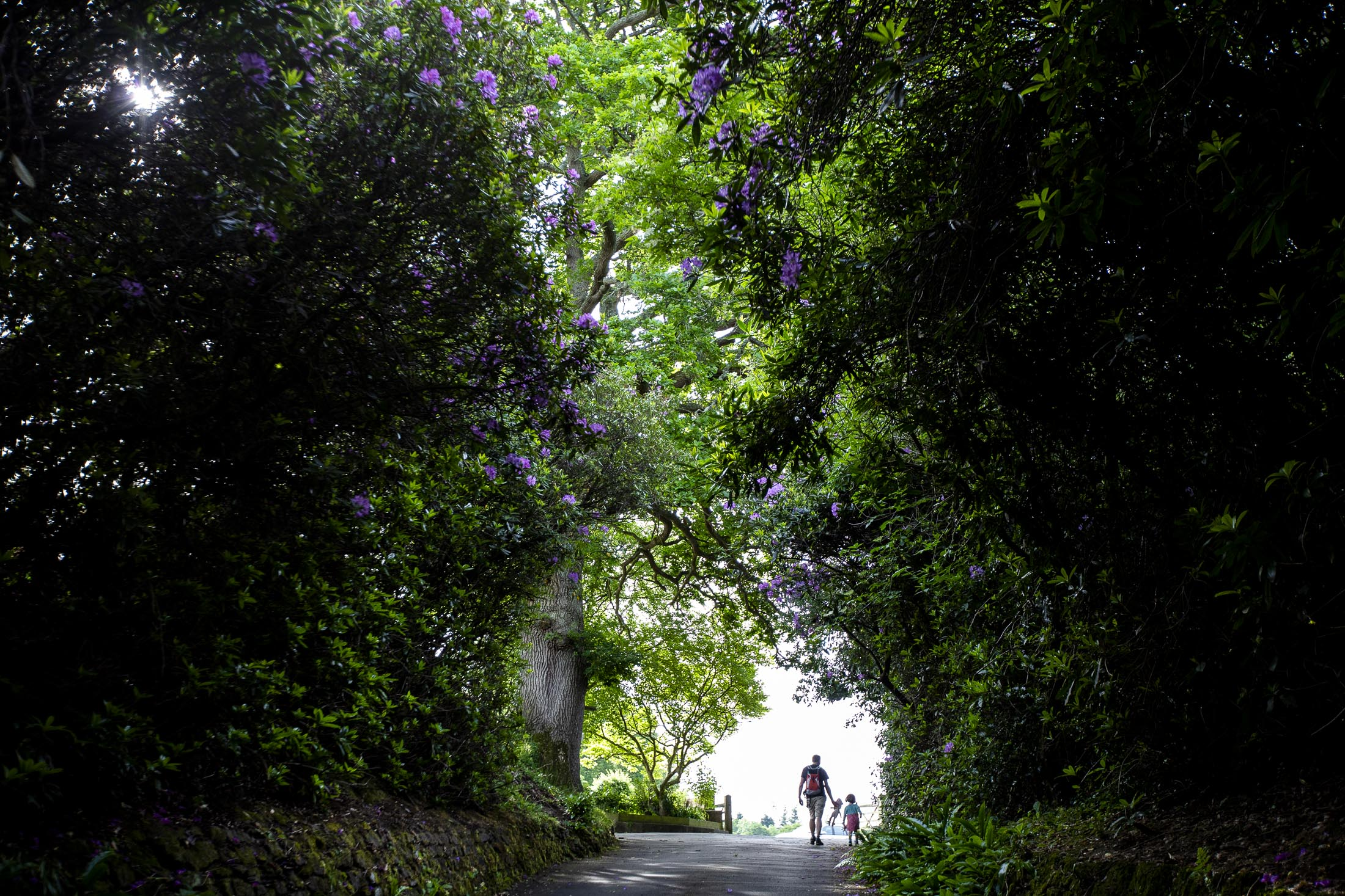 walking in the tree tunnel family photography.jpg