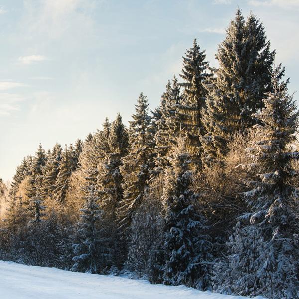 Canadian Northern Corridor -