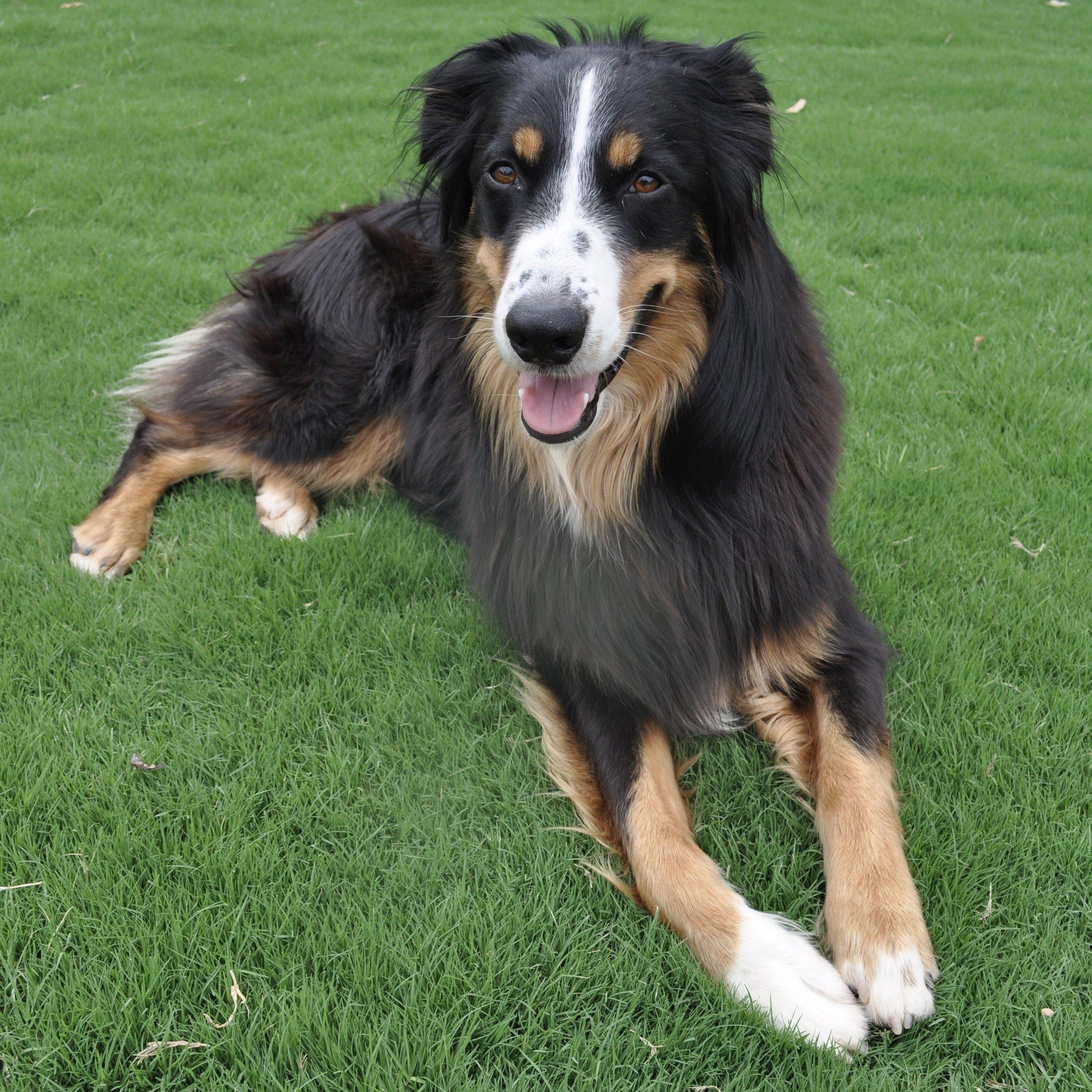 Meet Awesome Oscar - Shop dog extraordinaire