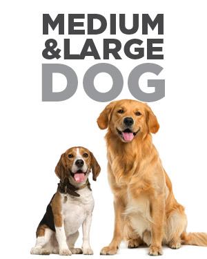 med-large dog home.jpg