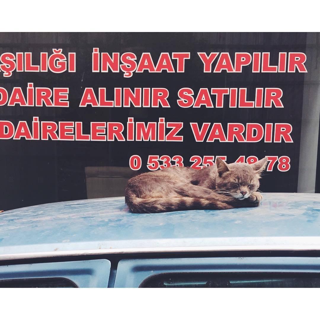 I feel like taking a nap as well #naptime  #cats #catsofistanbul #istanbul #turkey #neveraboringmoment #passionpassport #travelbug #travel #theurbanexpat #instaistanbul #instatravel #insta #instabest #instagood #vsco #vscocam #vscobest #vscotravel #vscoistanbul #mytinyatlas #TellOn #liveby #WidenYourWorld #LoveFromTurkey @turkishairlines (at Istanbul -Turkey)