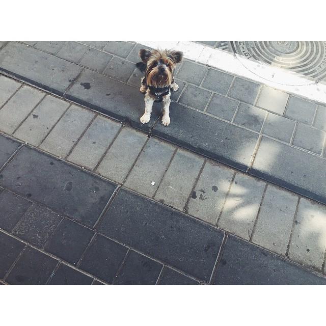 So much about Tel Aviv is about cute furry creatures #furrycreatures #dogs #cutedogs #telaviv #israel #colorfulworld #summeroftravel #mytinyatlas #TellOn #travel #travelbug #passionpassport #insta #instabest #instagood #instaisrael #instatravel #instatelaviv #vsco #vscocam #vscobest #vscoisrael #vscotravel #vscotelaviv #b#neveraboringmoment  (at Tel Aviv City)