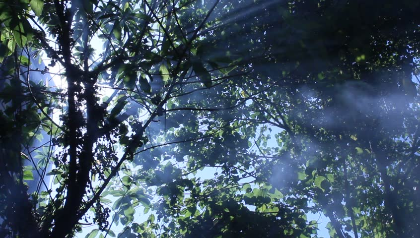 dense_jungle_fog.jpg