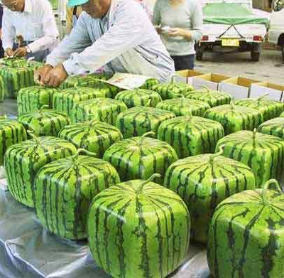 square-watermellons_11.png