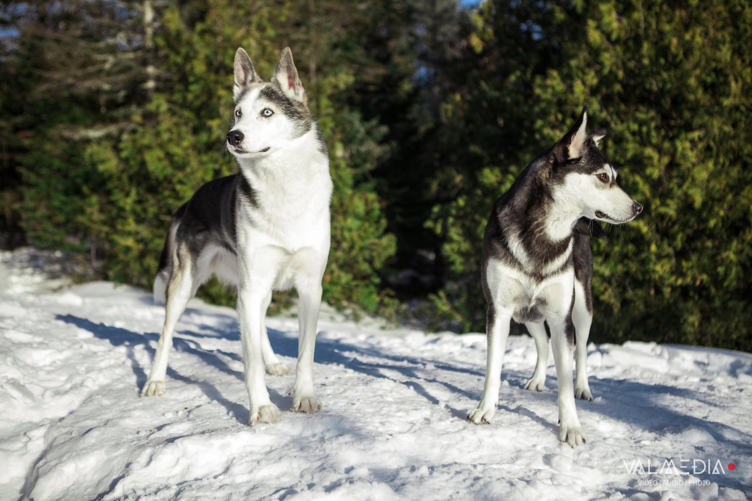 Stash et Calypso - Val-David