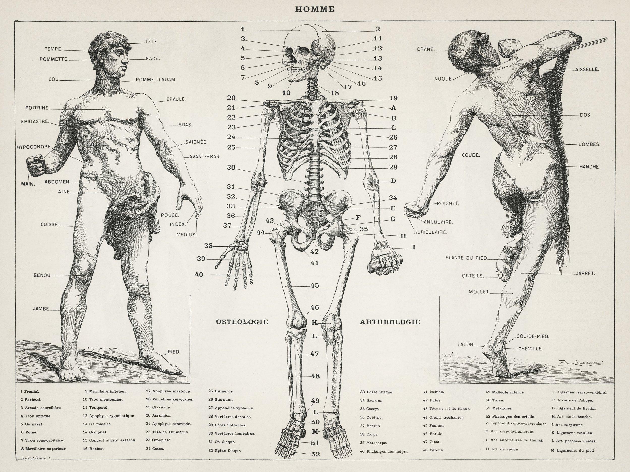 scheletro.jpg