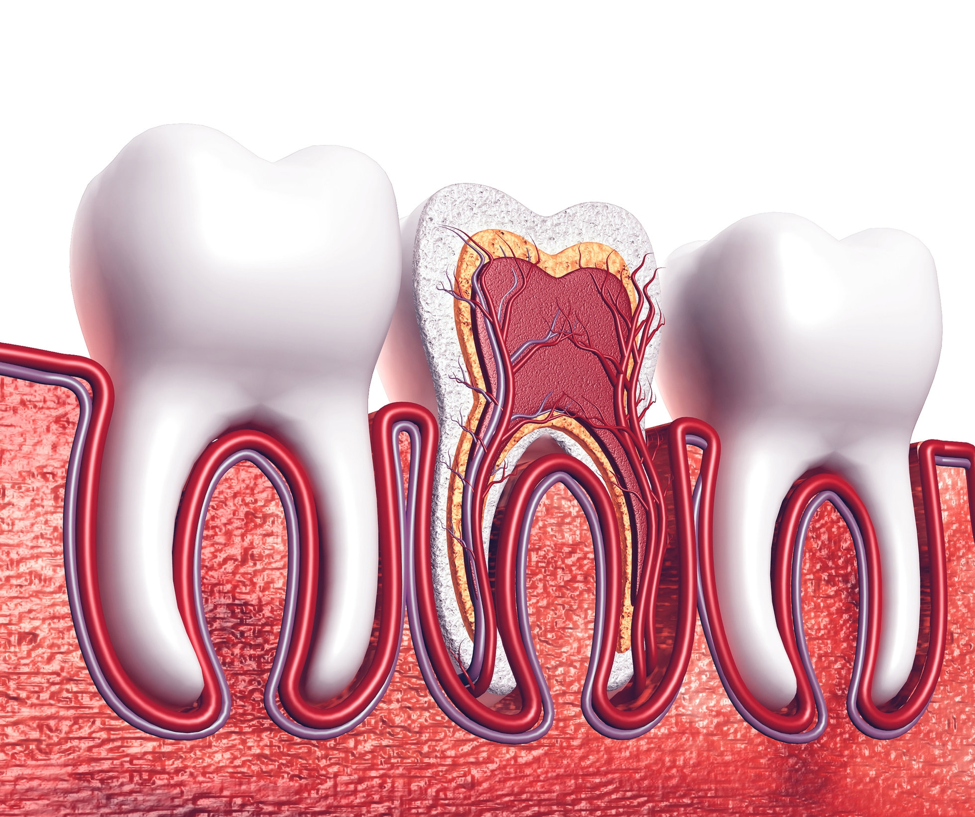 root canal therapy Geelong Dental Centre.jpg