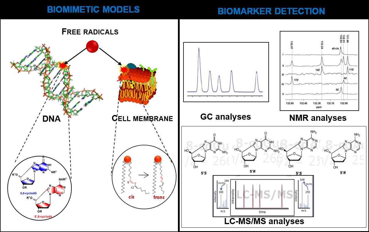 Biomimetic model.png