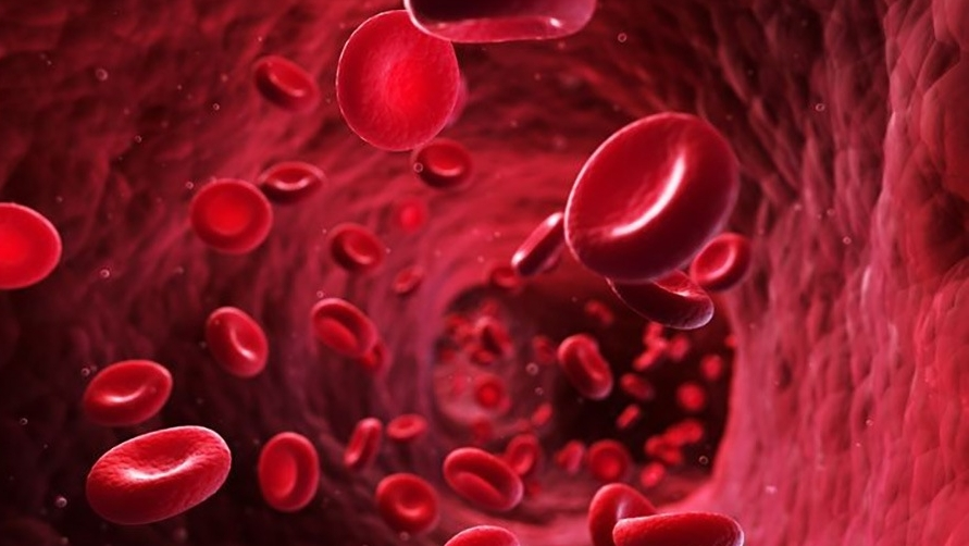 red blood cell _2_10cm.jpg