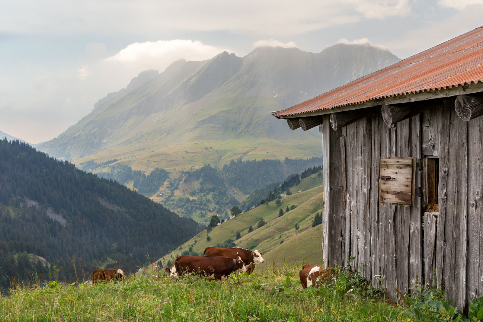 Chalet Alpage Summer - Reportage Photo - Victor Perez - Atelier VE-1.jpg