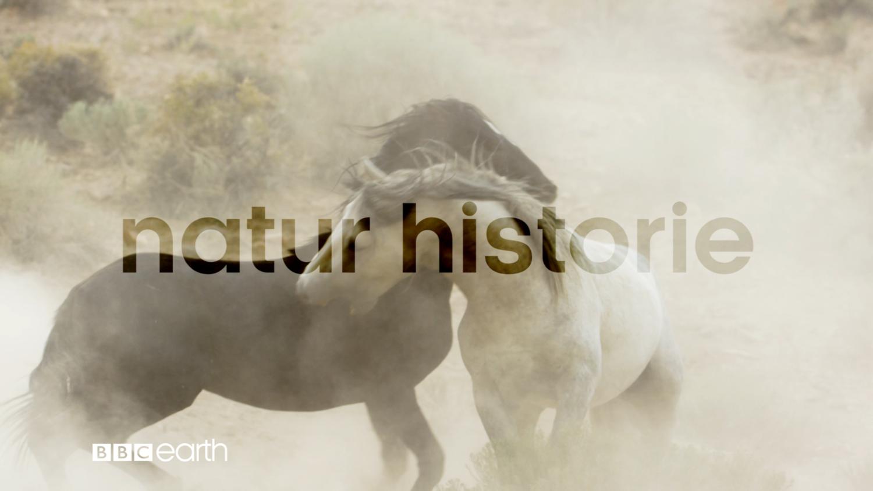 "NATURAL HISTORY - (NORWEGIAN) 45"""