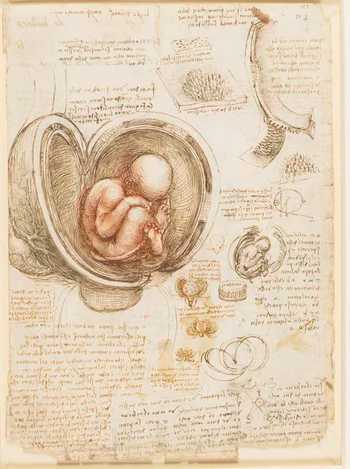 Leonardo,  The Foetus in the Womb , Red chalk and traces of black chalk, pen and ink, wash, #RCIN 919102, image Royal Collection Trust