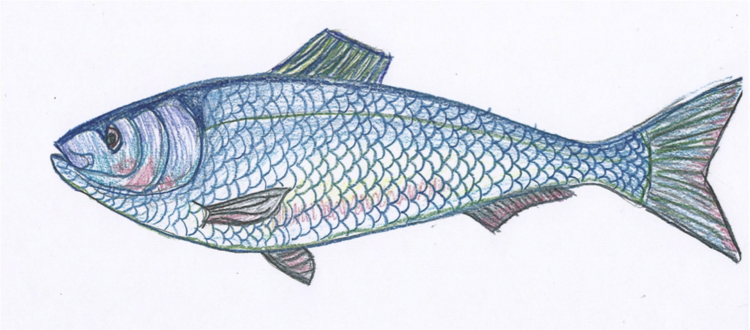 honoring-our-herring-by-tia-pocknett.png