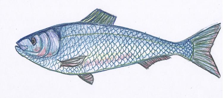 honoring-our-herring-by-tia-pocknett.png