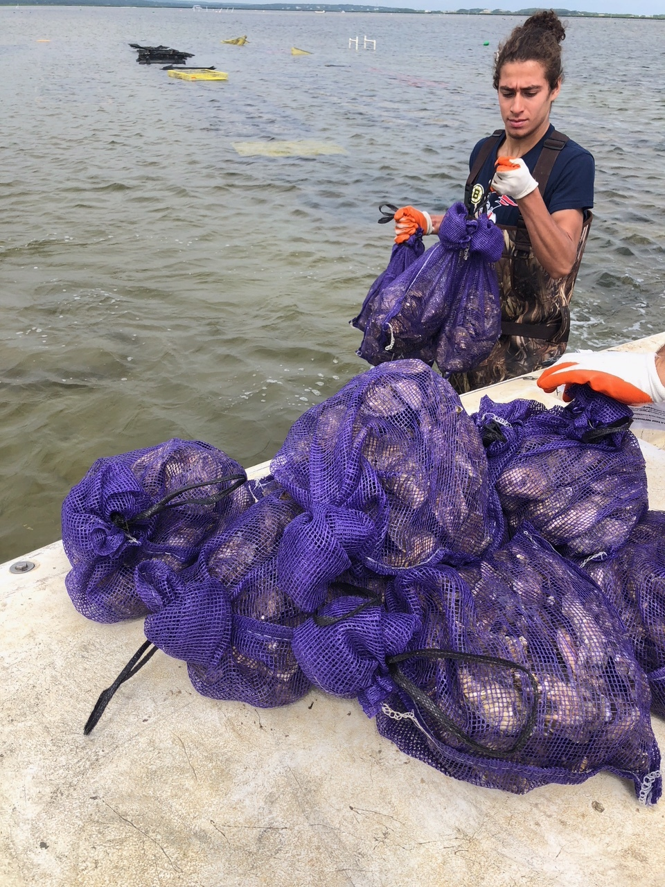 Nathan Mills Interning at Oyster Grant in Barnstable Harbor