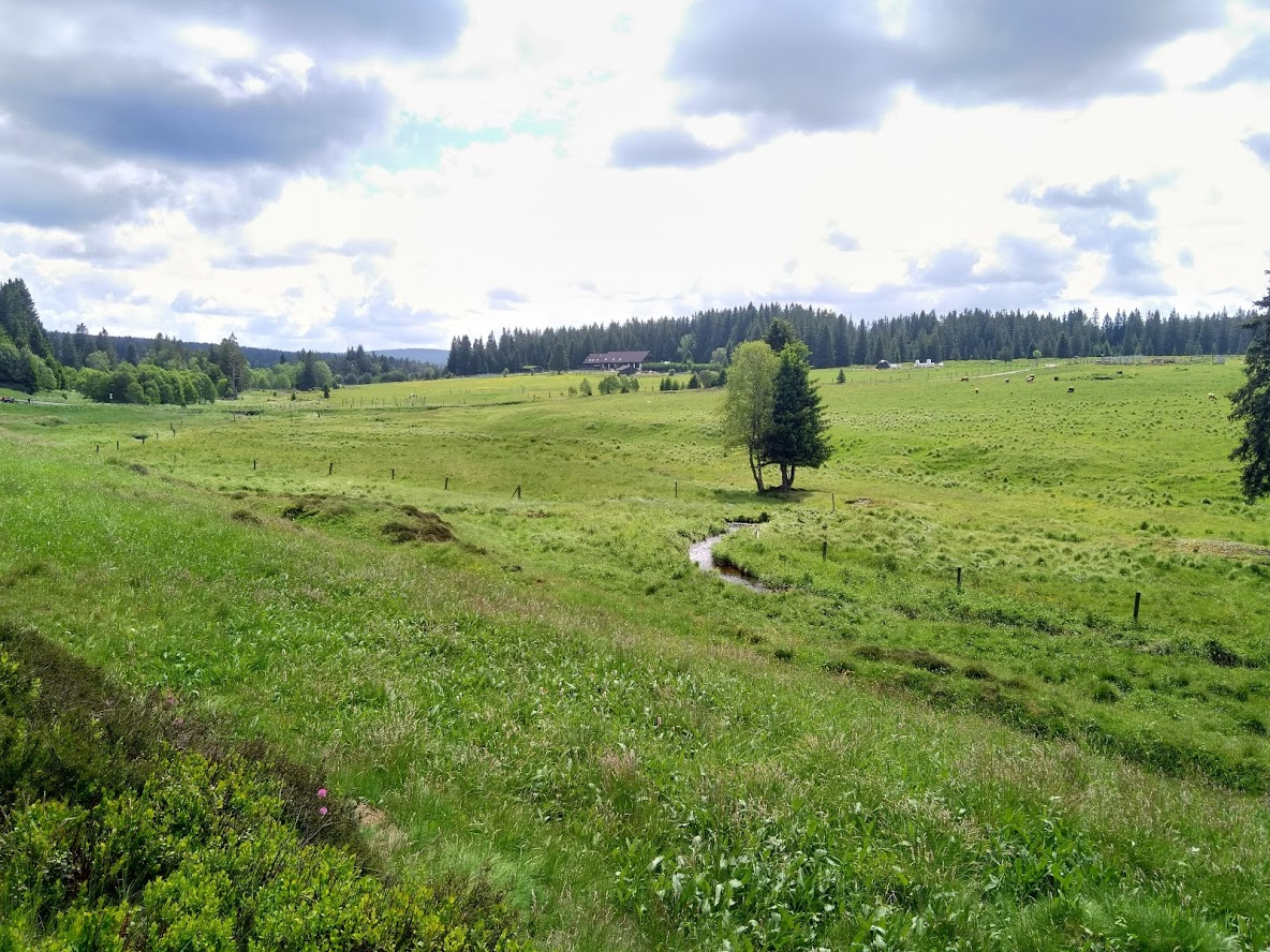 BÝT VENKU - šumava I..jpg