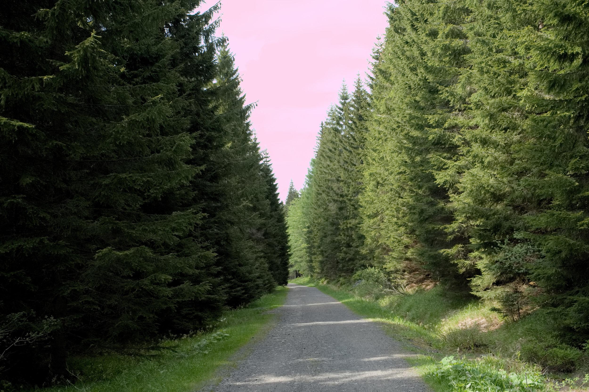 Tohle je ještě les...
