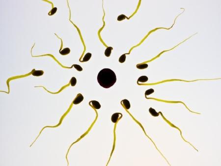 sperm-956481_960_720.jpg