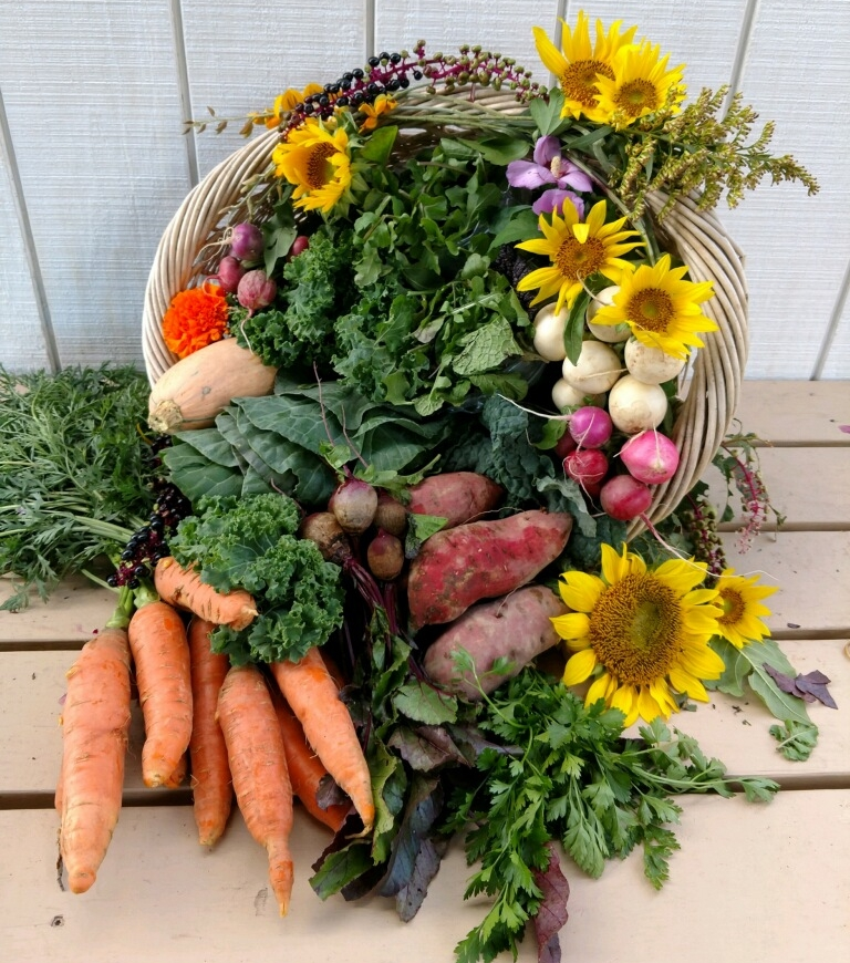 If you love to cook with fresh, seasonal produce and know that your food was grown WITH LOVE AND CARE, then our Farm's harvest IS PERFECT FOR YOU - SEE WHAT'S NEW
