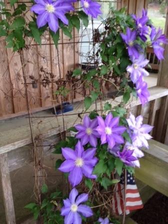 flower.purple.JPG