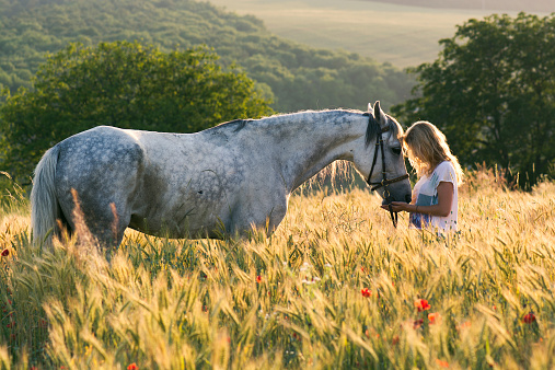 Energy healing for horses and other animals