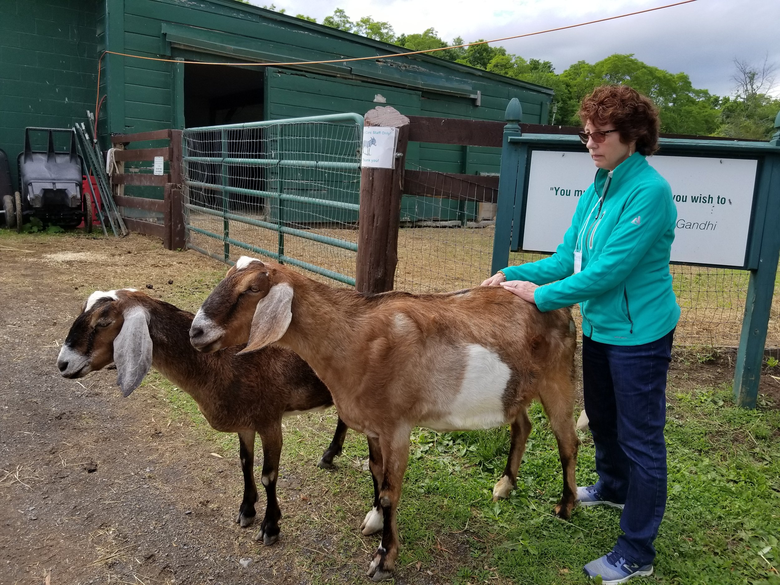 Reiki energy healing for goats and other animals