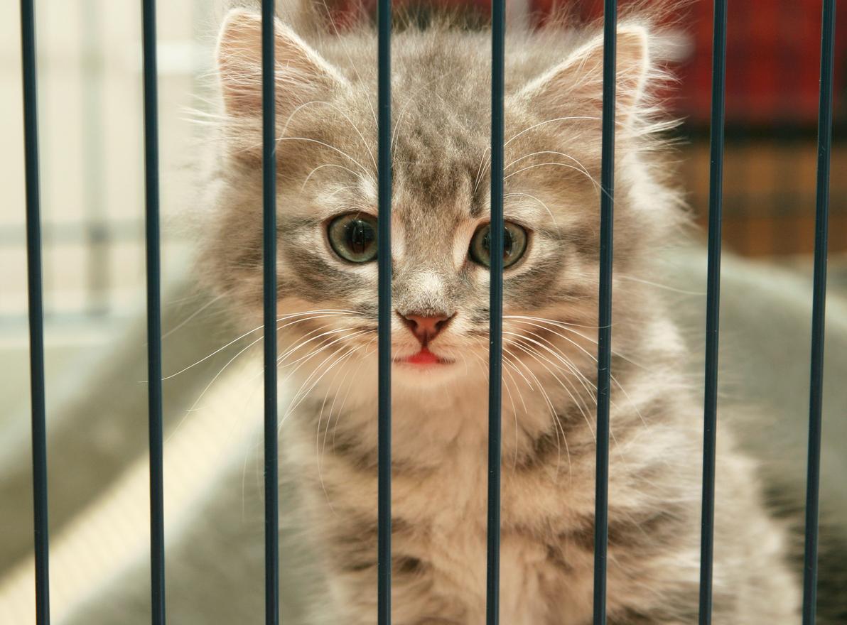 Kitten in Cage.jpg