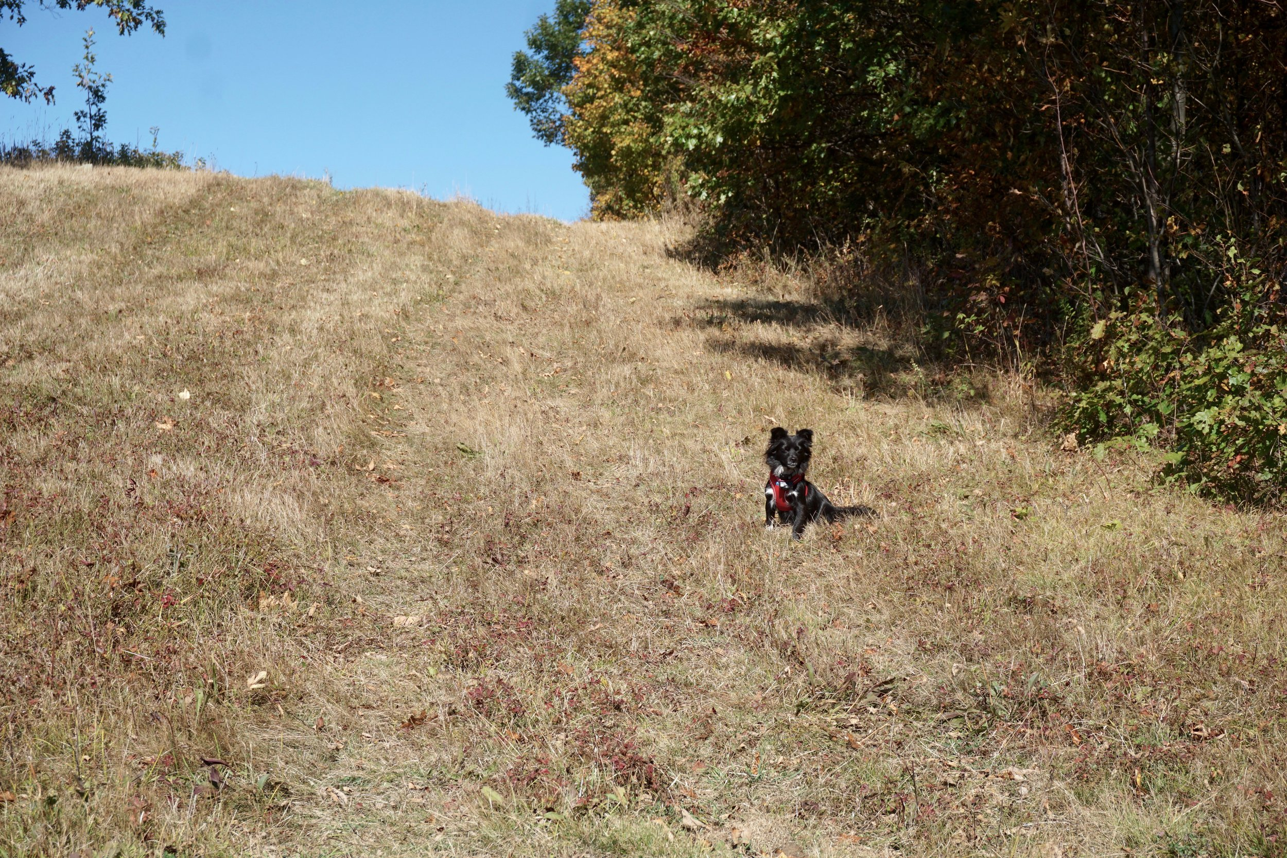 This is an activity the whole family can enjoy. Little bouncy Finn literally pounces up and down the mountain.
