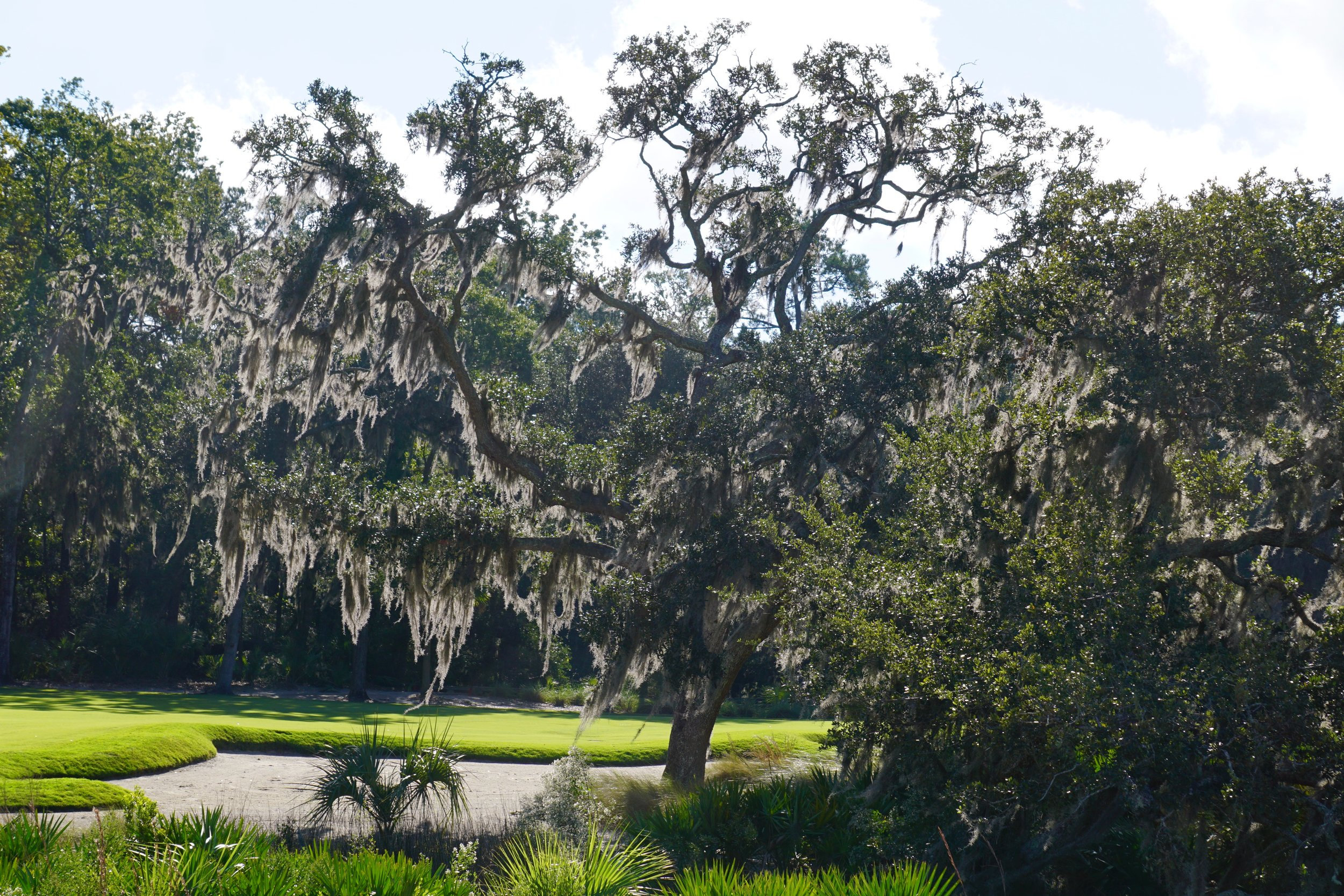 Eerie and very romantic Spanish moss is everywhere