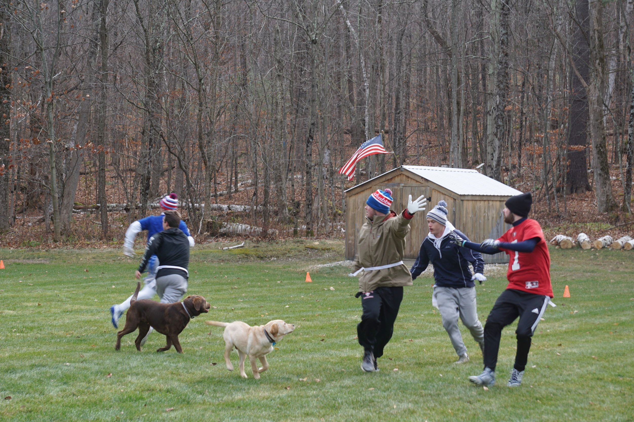 Some of the dogs like to play football.