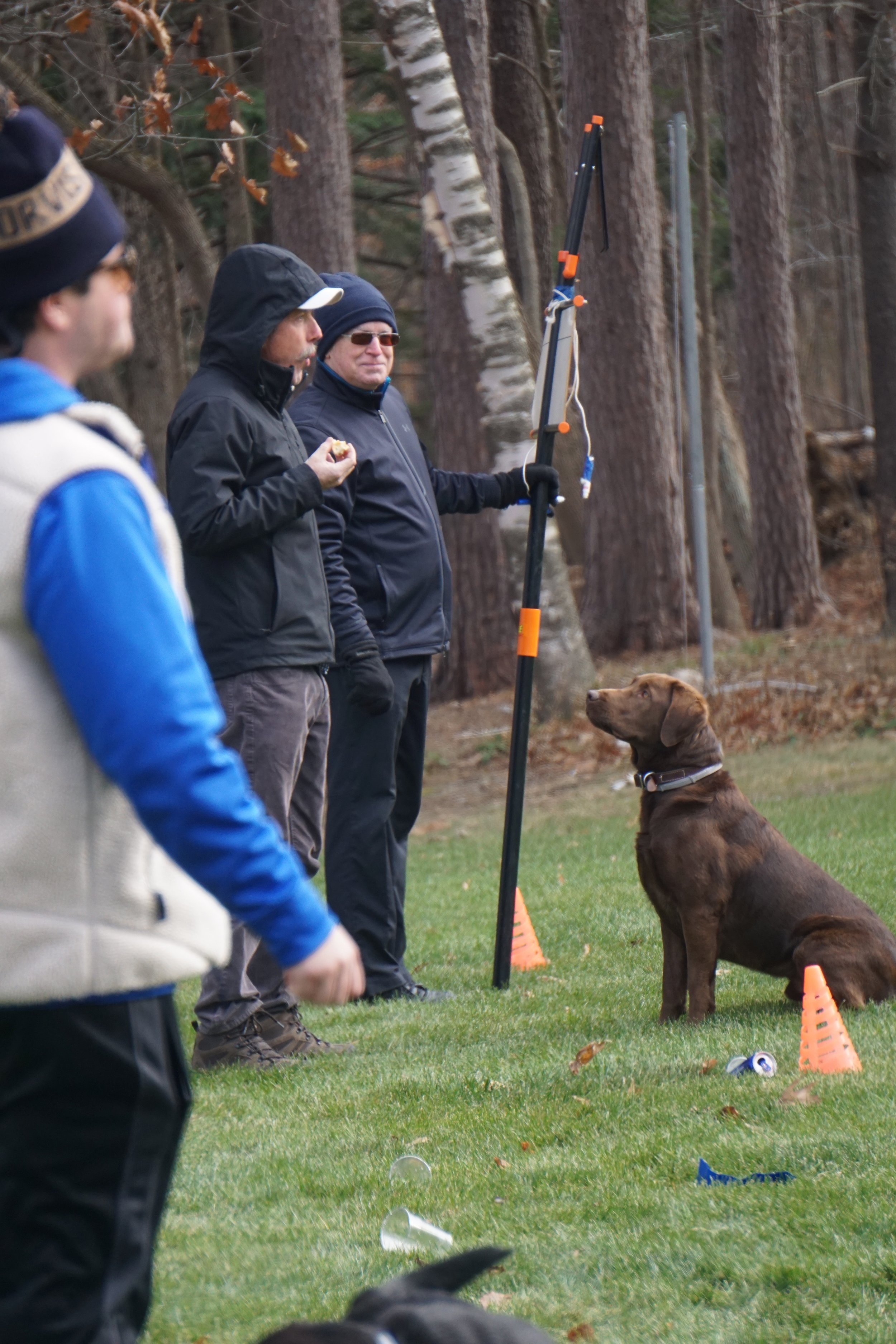 Some dogs prefer to watch the line judges eat donuts.