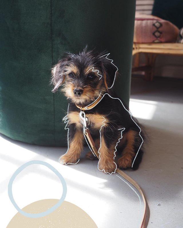 Een foto van je hond in de huiskamer, dat heeft toch iets awkwards, vind ik dan. Maar man, wat kun je veel van zo'n beestje houden hè? En dus verdient hij/zij zeker wel een erespot in jouw huis. Ik heb dé oplossing! Laat @florianne.design losgaan op je lievelingsfoto van je vierpotige vriendje en je hebt binnen no time een fijn kunstwerkje voor aan de muur. Het bewijs is hier: Florianne ging met Freddie aan de slag! En het resultaat is toch gewoon té cute? Je kunt haar gewoon even contacten, Florianne dus, en voor je het weet ben ook jij kunstwerk-technisch onder de pannen. Graag gedaan! 🙃🐶 #metdegroetenvanfred #dogstagram #doggo #doggos #instahond #dogoftheday #dogsofinstagram #hondenfotografie #hondenvaninstagram #honden #instadogs #ilovedogs #ilovemydog #ilovedogssomuch