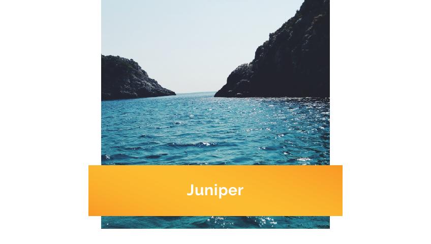Juniper_Thmnl.png