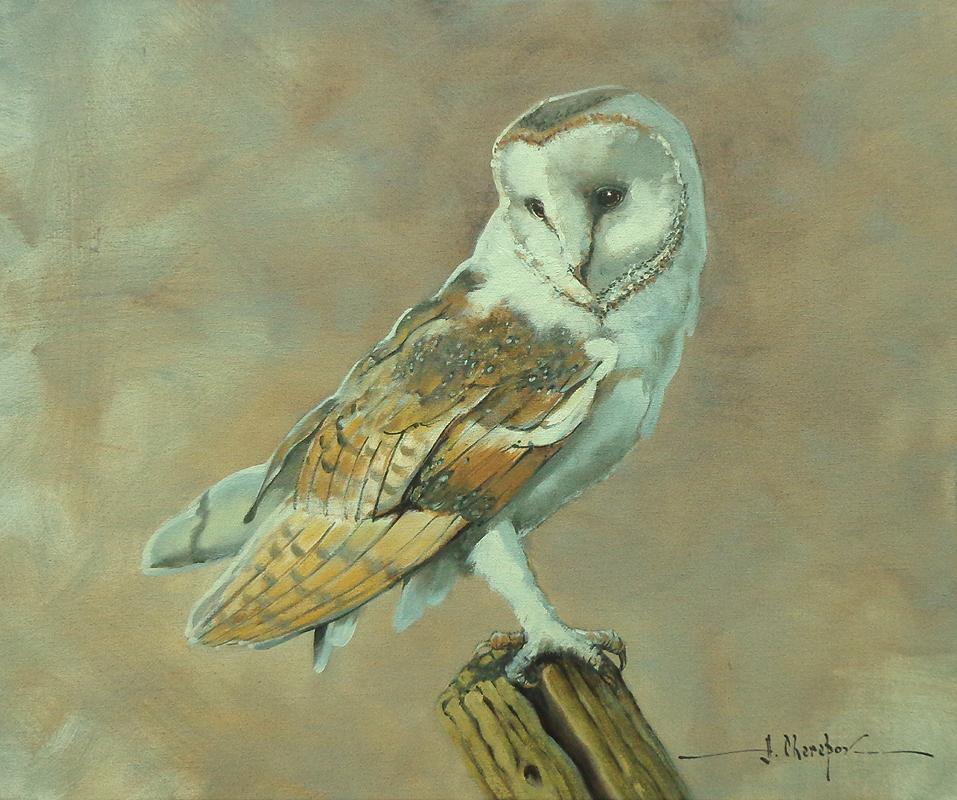 Barn Owl 20x24