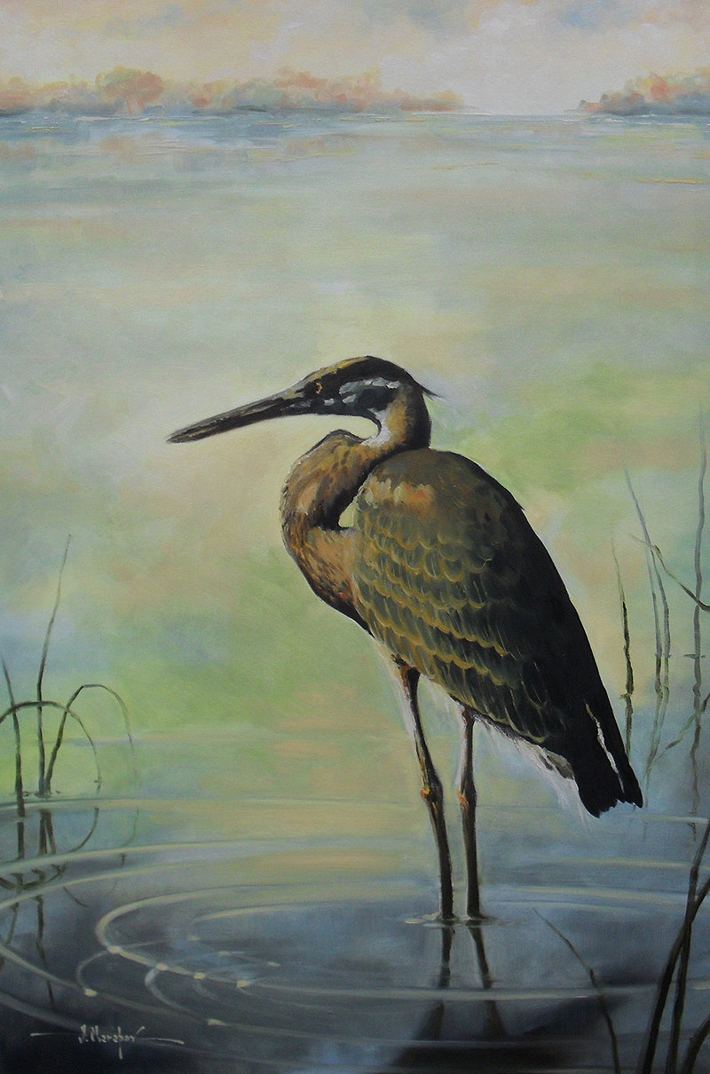 The Gray Heron 24x36