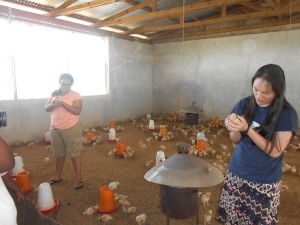 AIS students visit the chicken co-op.