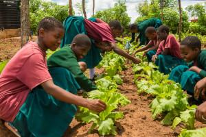 SEGA students work in SEGA's organic garden.