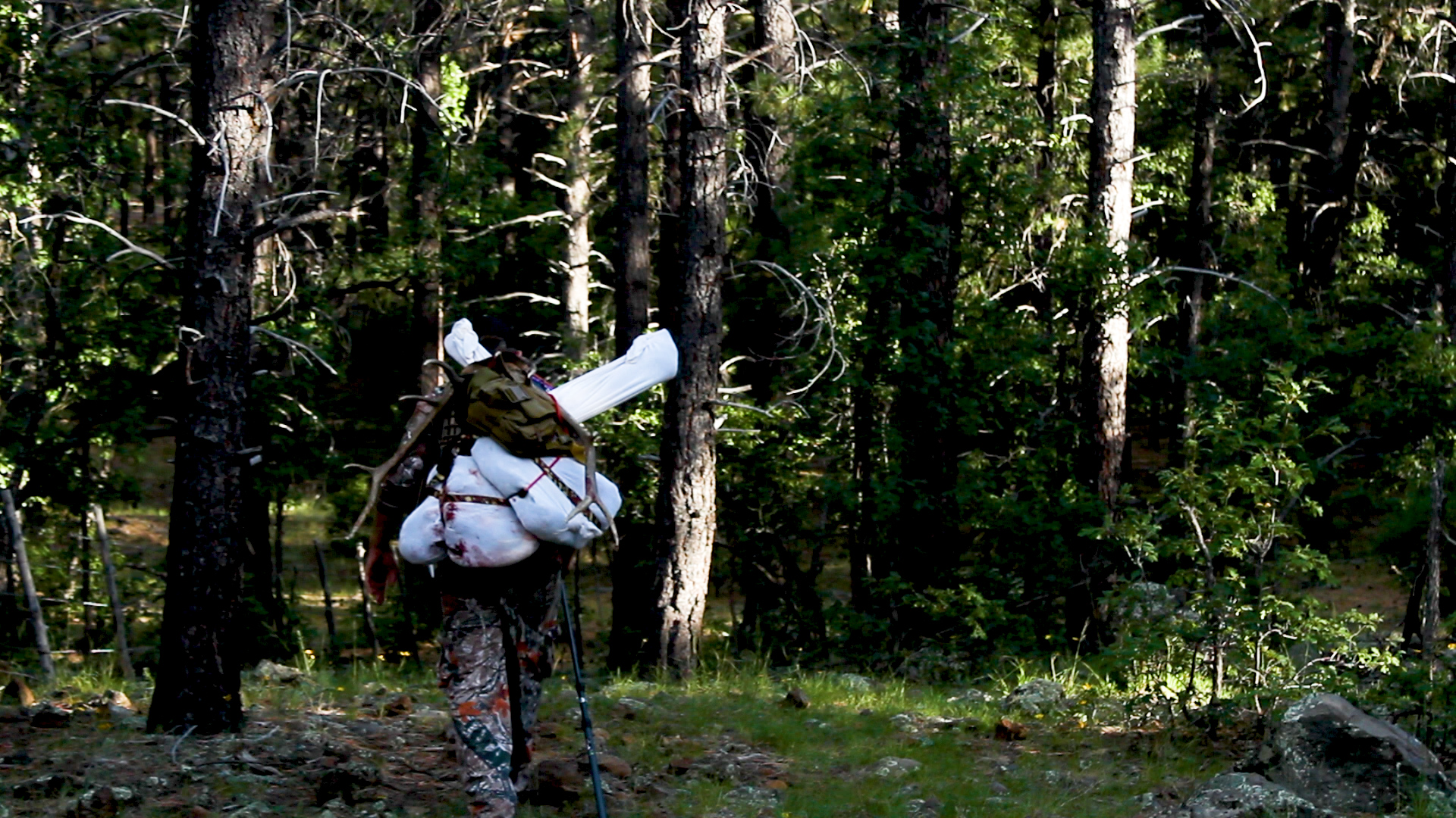 Yes, those are ratchet-straps securing two bone-in elk quarters to my back…I will NEVER wear that pack frame again in my life!!!