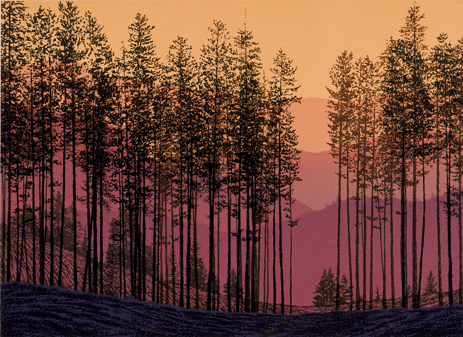 "184.3   Lodgepole Pines - state 2   17.5"" x 24"" – 445 x 610mm 12 colors 8 edition / 3 available $450"