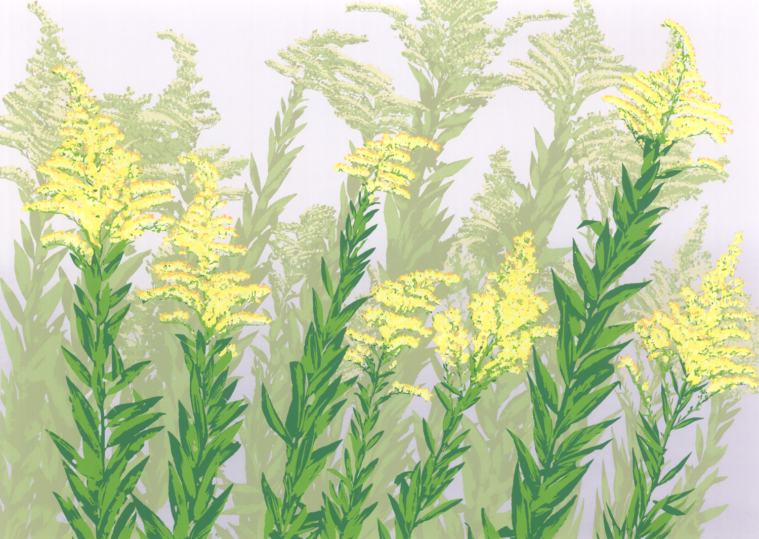 "161   Goldenrods   17.5"" x 20-24"" – 445 x 610mm 8 colors 30 edition / 7 available $450"